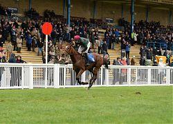 Horseracing in Newton Abbot Racecourse
